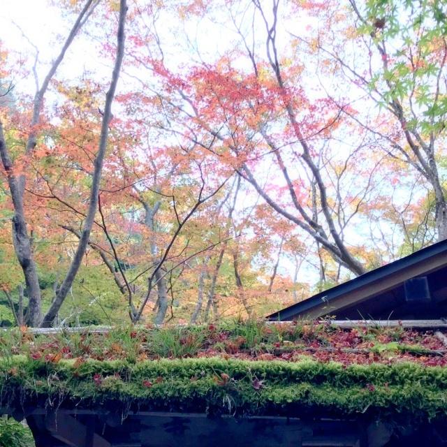 京都 嵐山 (21)
