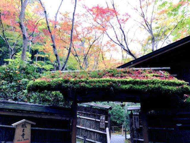 京都 嵐山 (22)