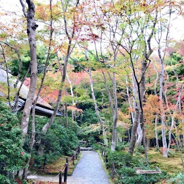 京都 嵐山 (23)
