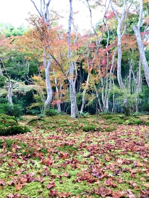 京都 嵐山 (24)
