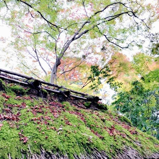 京都 嵐山 (27)