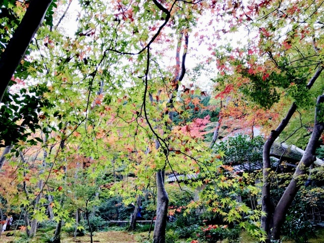 京都 嵐山 (31)