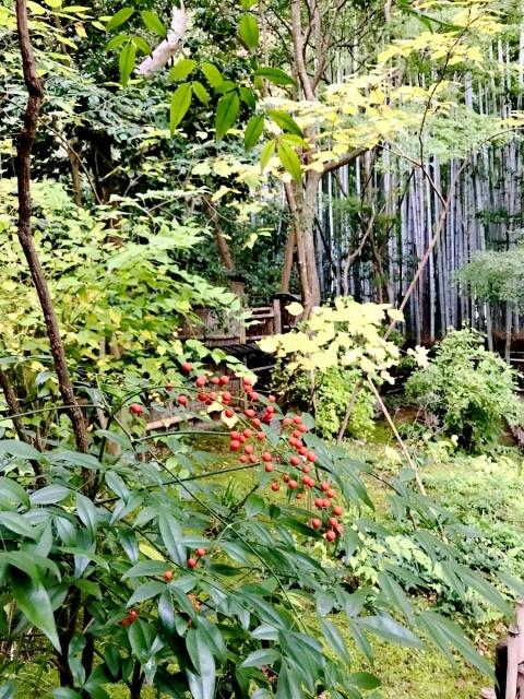 京都 嵐山 (33)
