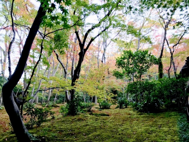 京都 嵐山 (32)
