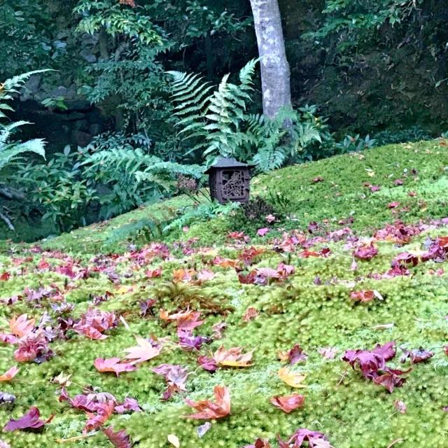 京都 嵐山 (37)