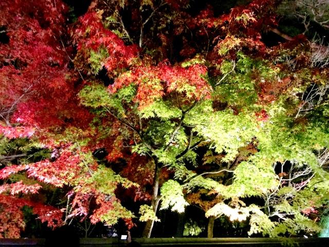 京都市左京区 (15)