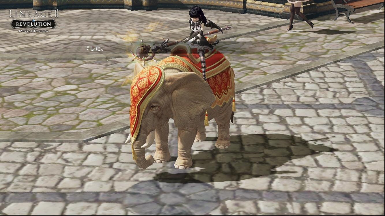 象さんに乗ってみる