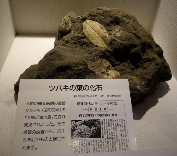 椿葉の化石