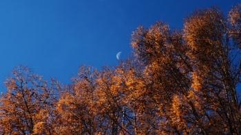 IMG_701112月の唐松と月s