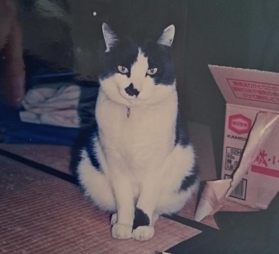 猫がいい味だしてた映画【ボヘミアン・ラプソディ】フレディと猫たち