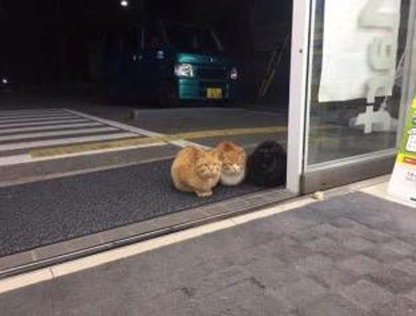 猫の手も借りたいって聞いたので