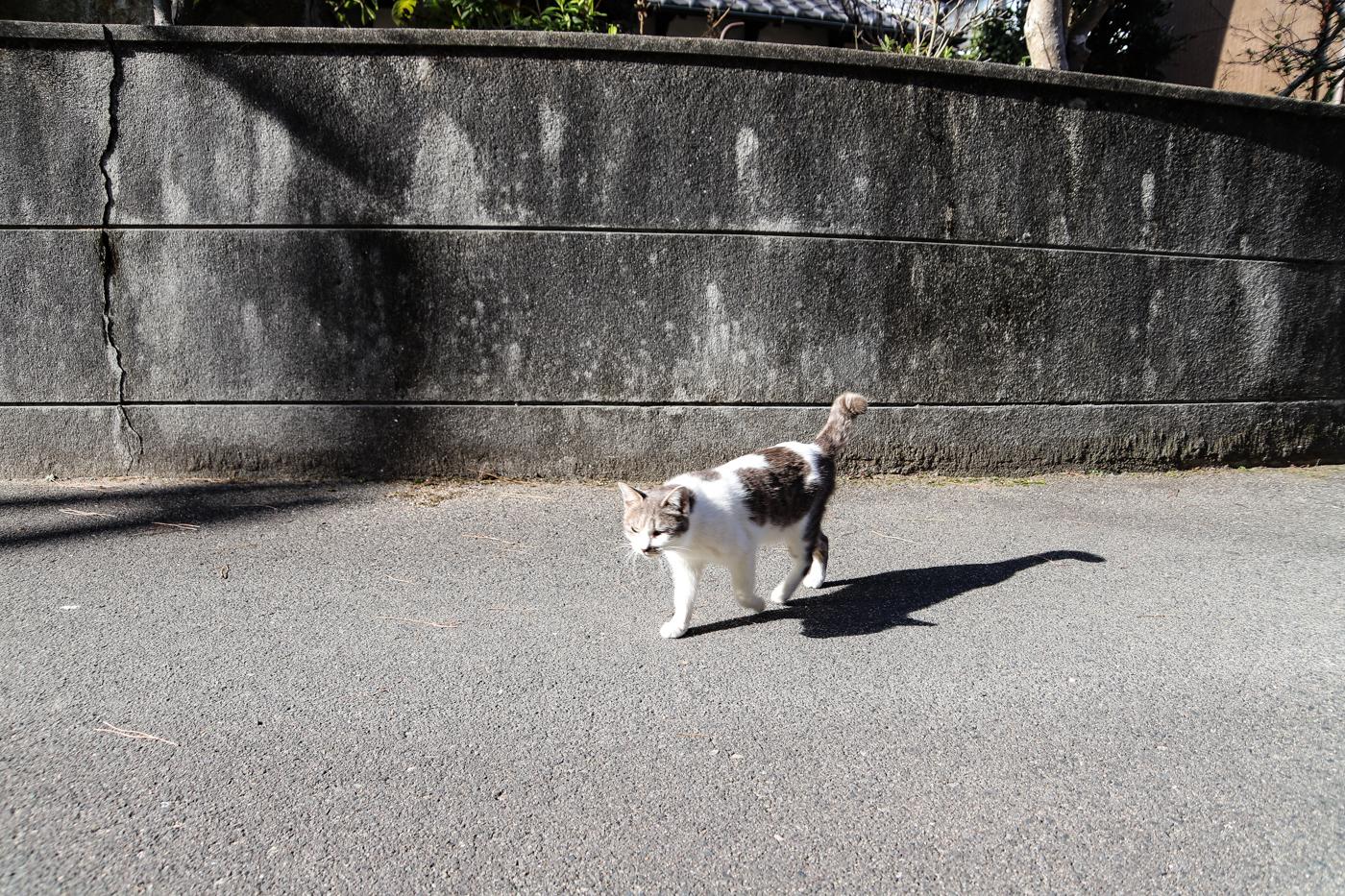 ninoshima-29.jpg
