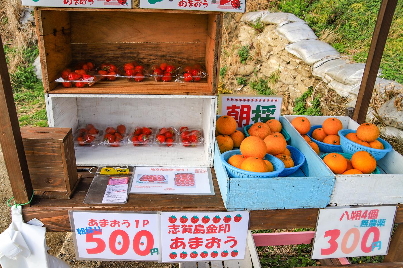 shikashima-18.jpg