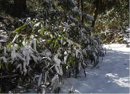 雪景色湯坂路190325
