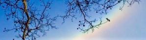 木と虹のコピー 2