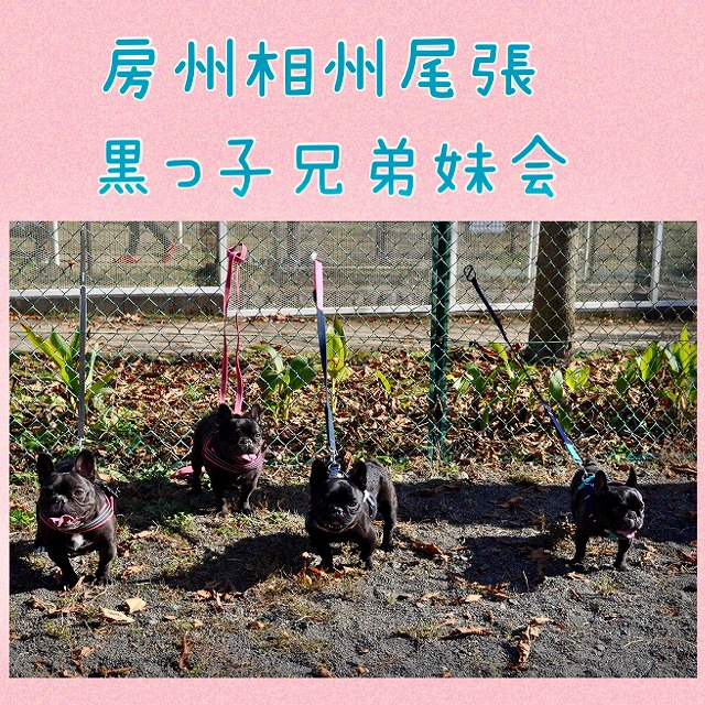 IMG_4938 (編集済み)