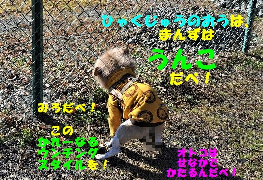 DSC_0030_20190201093734850.jpg