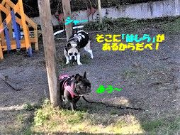 DSC_0181_20181130133719874.jpg