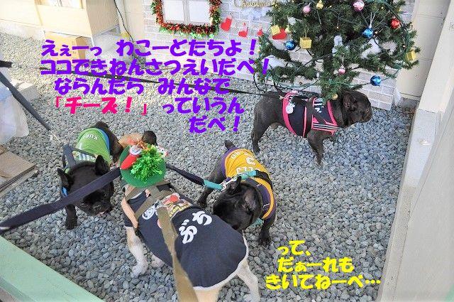 DSC_0208_2018112917112501e.jpg