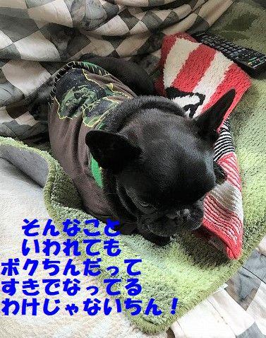 IMG_2093_2018111209590829b.jpg