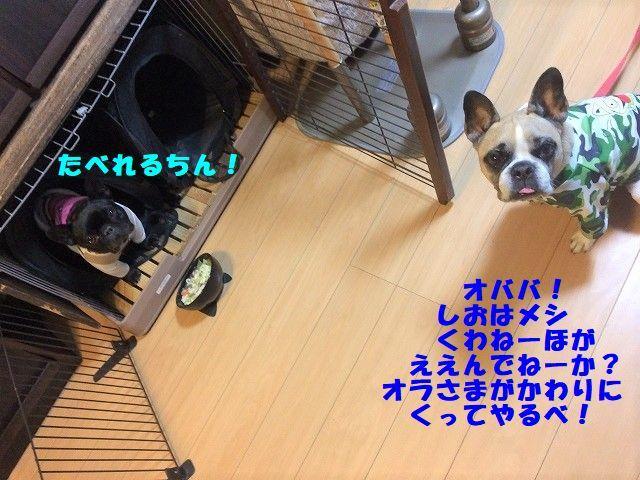 IMG_4486_20181104113536353.jpg