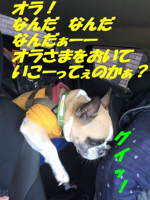 IMG_4739_20181122101600429.jpg