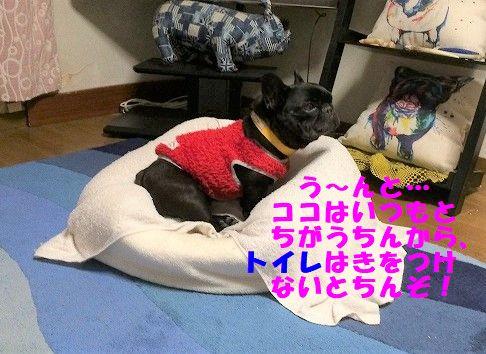 IMG_5832.jpg