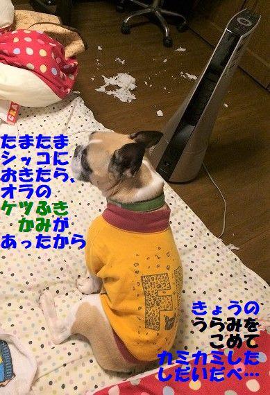IMG_6033_2019011710163096b.jpg