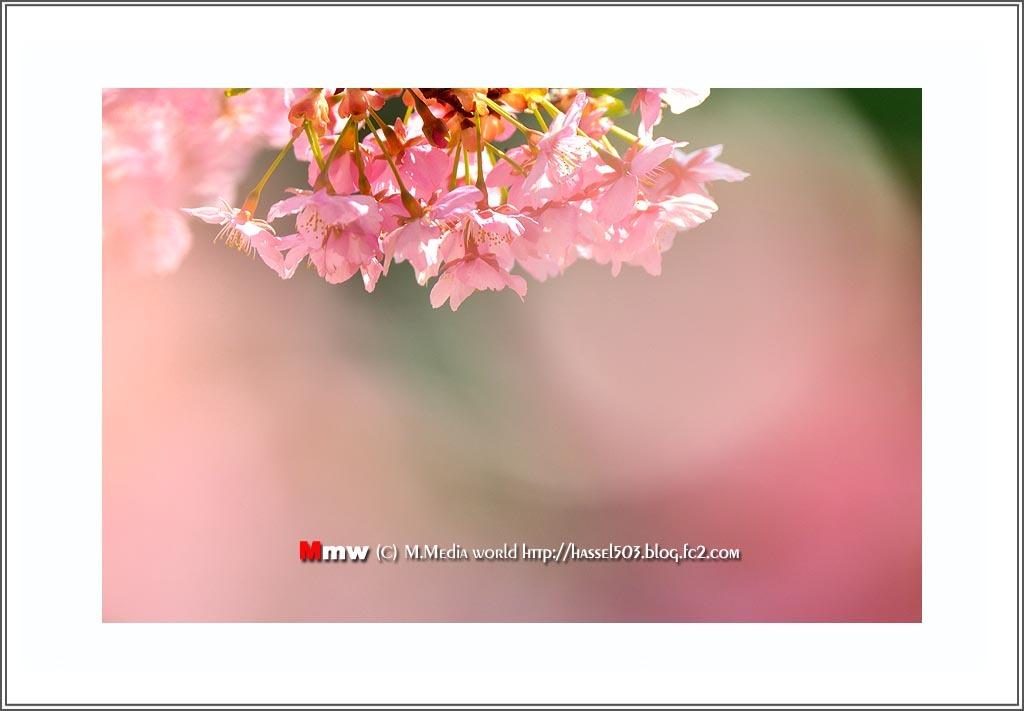 fc2_19_4_02.jpg