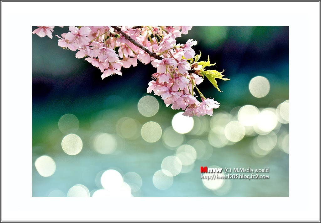 fc2_19_4_05.jpg