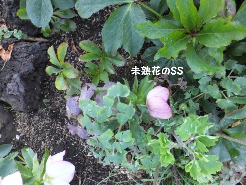 DSCF0064_1.jpg