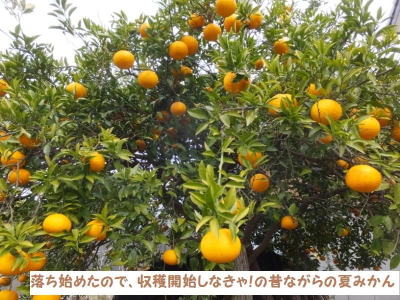DSCF0160_1.jpg