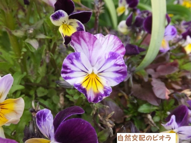 DSCF0165_1.jpg