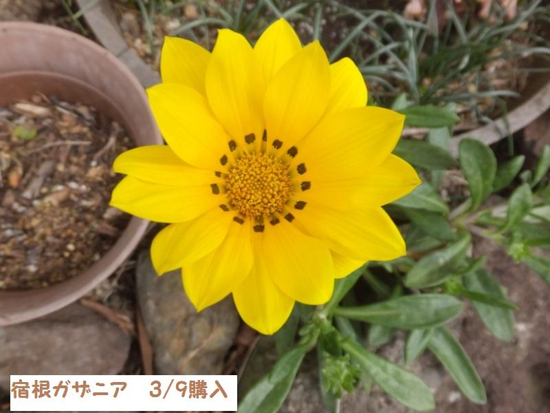DSCF0168_1.jpg