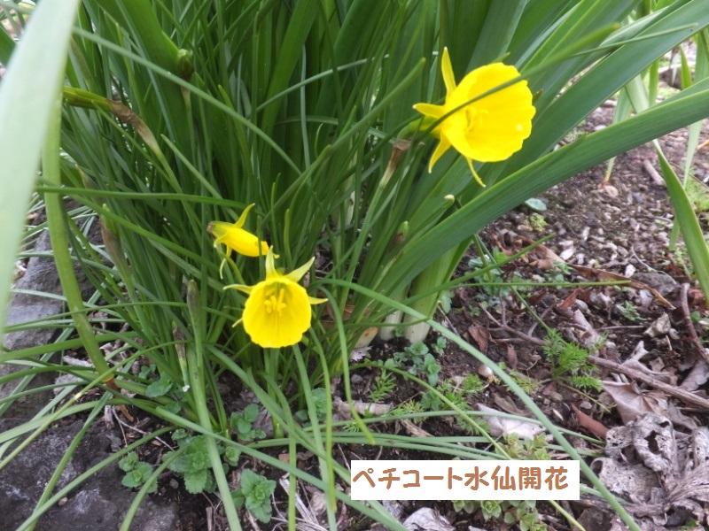 DSCF0170_1.jpg
