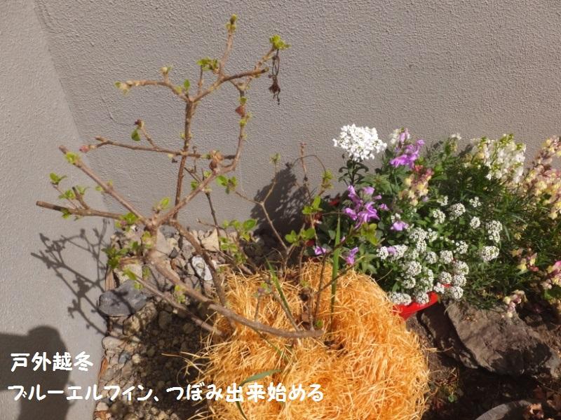 DSCF0220_1.jpg