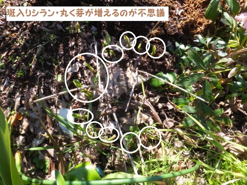 DSCF0244_1.jpg