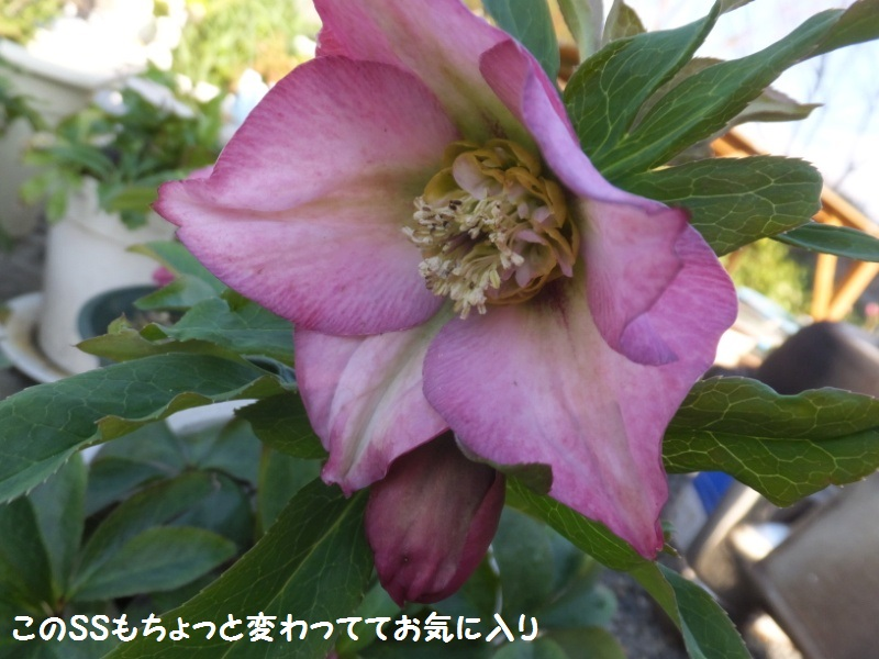 DSCF0258_1.jpg