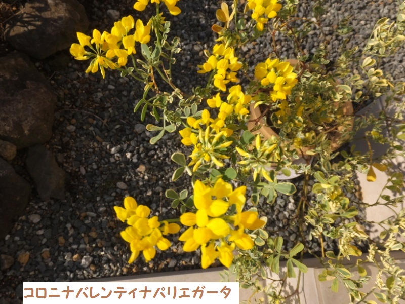 DSCF0263_1.jpg