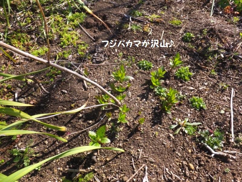 DSCF0336_1.jpg