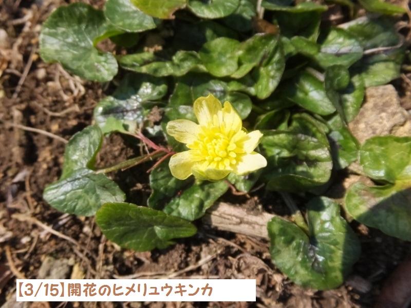 DSCF0367_1.jpg