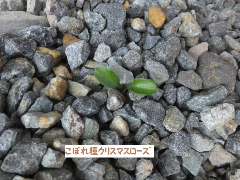 DSCF0412_1.jpg