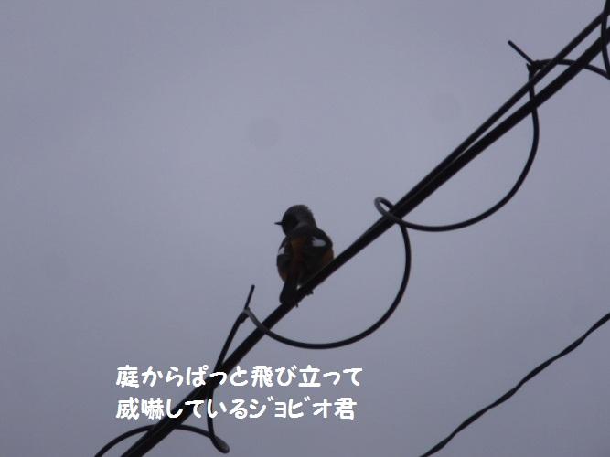 DSCF7632_1_201901061519405c5.jpg