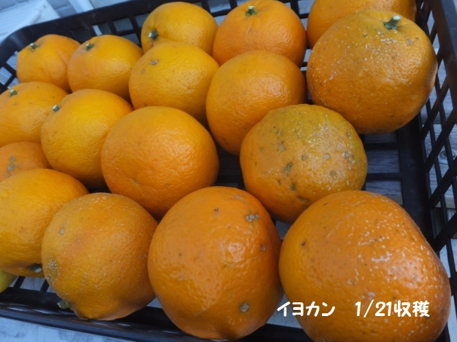 DSCF8143_1.jpg