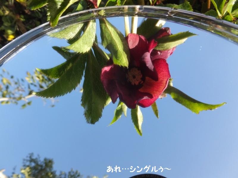 DSCF9421_1.jpg