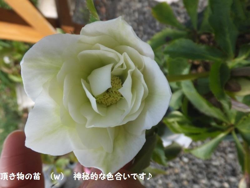 DSCF9541_1.jpg