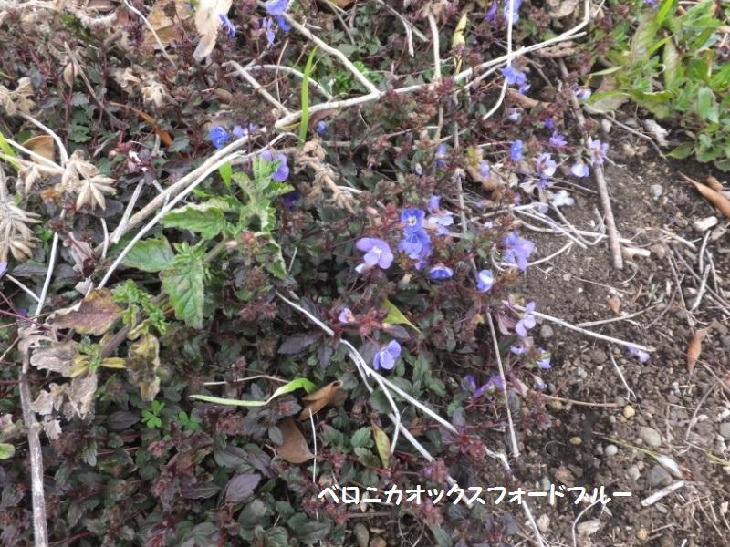 DSCF9663_1.jpg