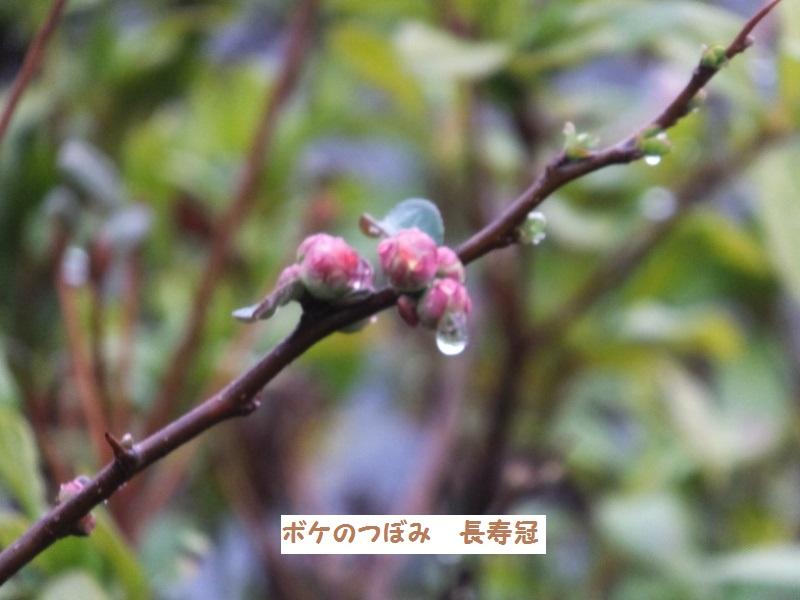 DSCF9719_1.jpg