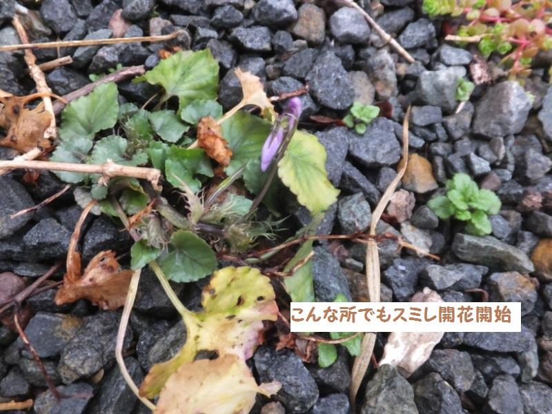 DSCF9720_1.jpg