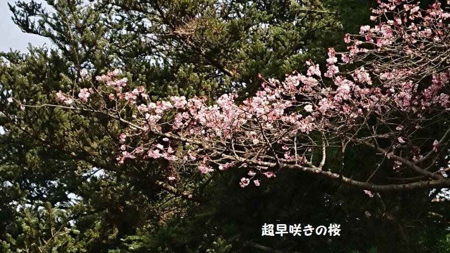 DSC_0066_1.jpg
